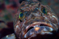 A face only a mother could love...