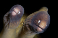 Mr & Mrs Moray