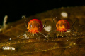 Let's Dance - LAOLA
