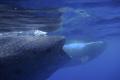 2 whalesharks