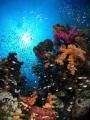 Coral gardens @ Jackfish alley
