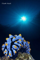 nudi in blue
