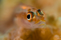 Goby portrait