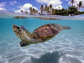 Turtle over/under, taken with Canon 20D W/10-22 MM lens in 8