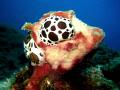 snail Dalmatian