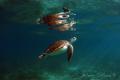 Turtlelight ... Akumal Bay