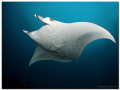 Fairytale is an amazing manta point near Helengeli (North-Male-Atoll).