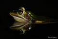 Frog's reflection