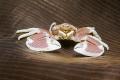 OUTSIDE II Anemone Porcelain Crab - Neopetrolisthes maculatus (maculata) - Punkttupfen-Anemonenkrebs