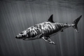 Shot with a canon 40d with a 10-22 in an ike housing with natural light, at gorgeous Guadalupe island. 