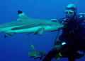 Shark , Black Tip