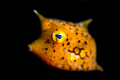 Whistle