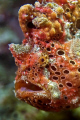 ARGUE