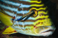 fishes also sometimes suffers...  :-(