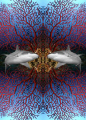 Sharks! The picture show a reflection of a grey reef shark with a backgroud of mediterranean red gorgonia sea fan.