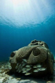 Anthrpocene. A cement replica of a VW beetle in the Museum of underwater Art.