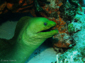 Photo taken of green moray on el cedral reef Cozumel.
