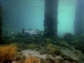 Barracuda under the BHB