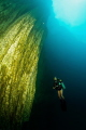 At 15 m in the barracuda lake, coron, philippines. Where the saltwater the freshwater meets.