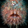 Scary Hairy