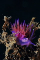 nudi in shadows