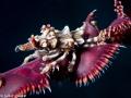 Xenon crab