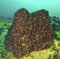 Zebra mussels lit from below . Dutch springs ,Nazareth,PA