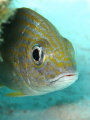 Nice fish in Bonaire