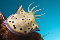 Nudi in the blue