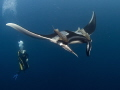 Another manta shot. Hope I don't bore you. But I really like these animals, even though it is difficult to capture their beauty in a photo.