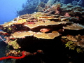 West End Wall, Roatan