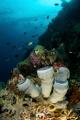 Underseascape