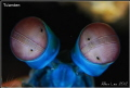 Mantis Shrimp's eyes.Nikon D80,105mmVR.