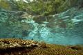 A healthy reef top in Misool, Irian Jaya - West Papua - Indonesia