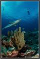 Vertigo, Yap Island; Nikon D7000, ISO400, 10mm, 1/160, f13