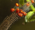 mites raiding egg gelatin