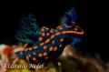 nudibranch d700 f10,1/320