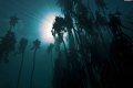 Kelp forest, with visibility of even the clouds overhead