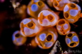 Smiling face!