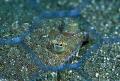 flounder behind the grid (Syria)