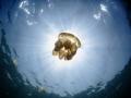 Jellyfish Lake Kakaban, S100 + wide angle +dual inon Z240. ISO80 F7.1 1/320