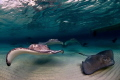 If you count them well, you will find up to 10 Southern Stingrays on the photo