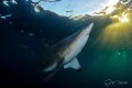 Admiring the Sun