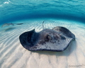 ZEN