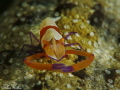 Lembeh (Nord Sulawesi)
