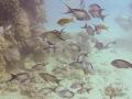 fish under pier