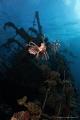 Giannis D & lionfish
