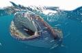 Whirlpool...! in Djibouti