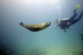 Check out dive in the Galapagos. Sea lions would swim right up to divers.