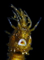 smile seahorse - canon g11, macro lens +10